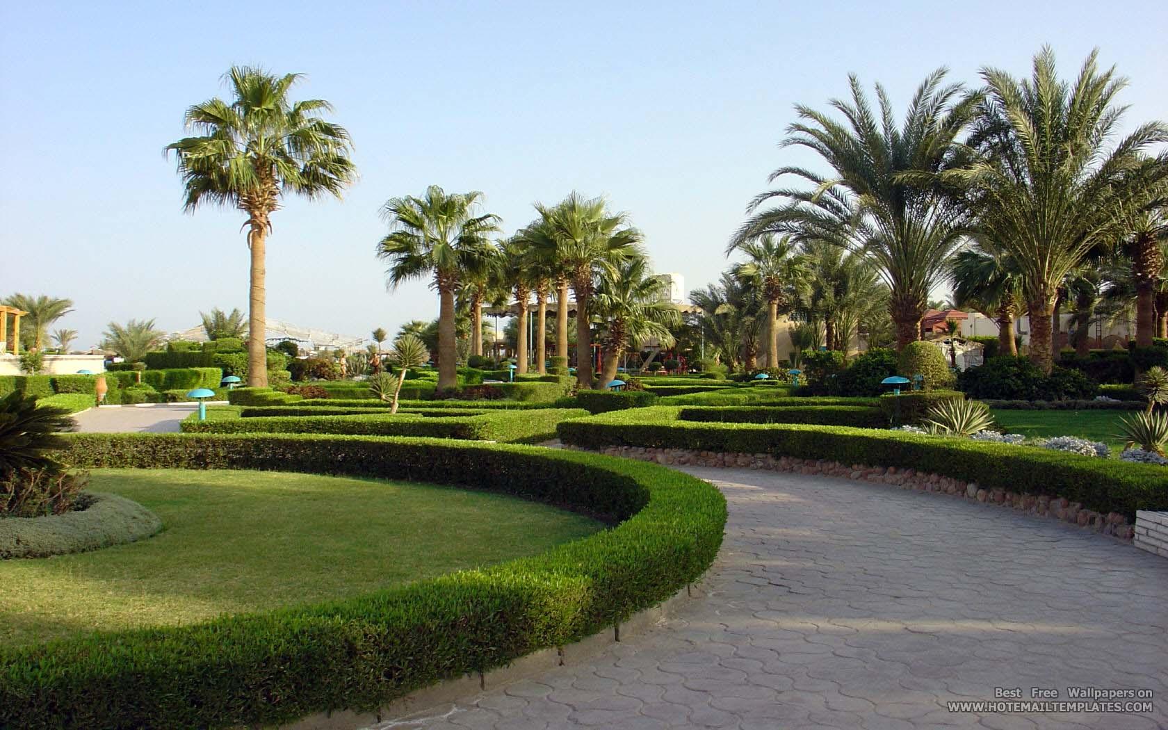 palm garden - Palm Garden