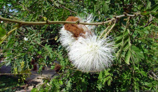 Email Template: Strange flower