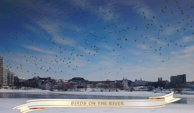 Email Template: Birds on the River