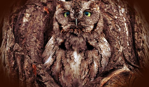 Email Template: Owl