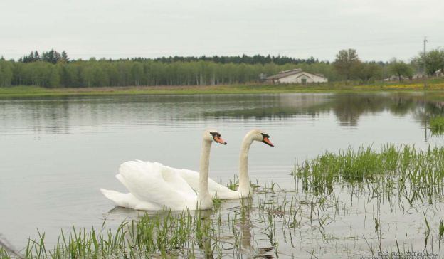 Email Template: Swan Lake