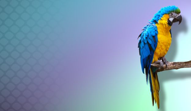 Email Template: Parrot
